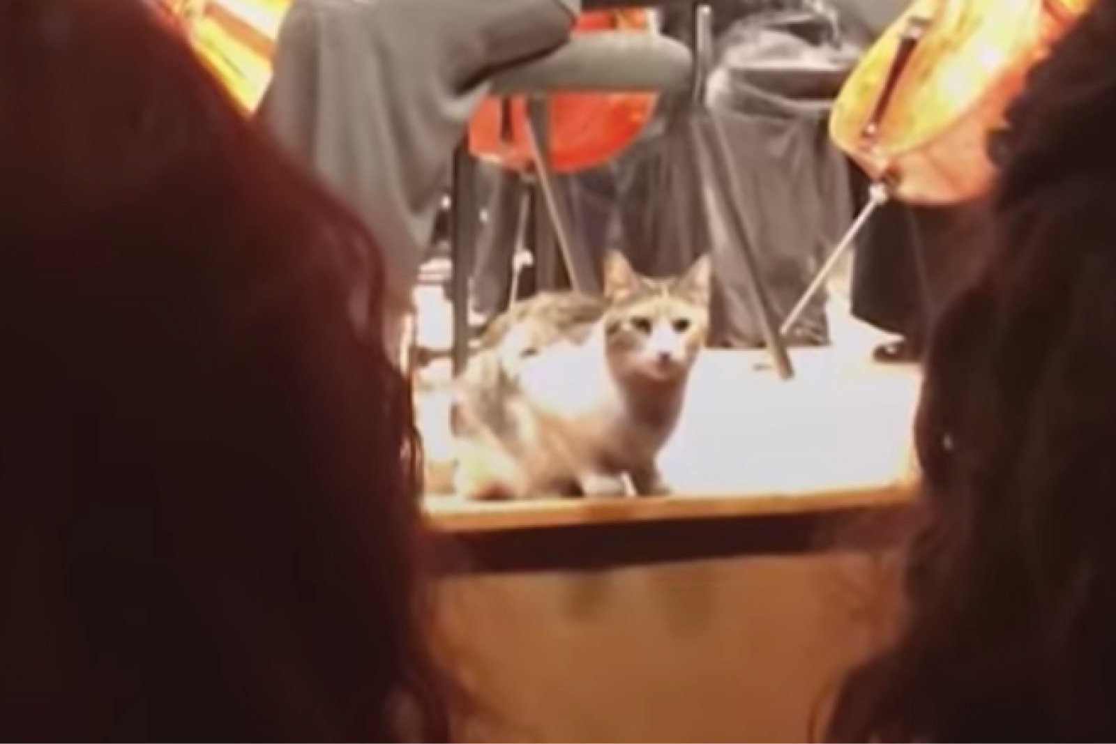Cat, Orchestra